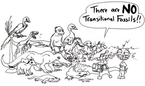 Archaeoptryx, Tiktaalik, and Homo habilis disagree.